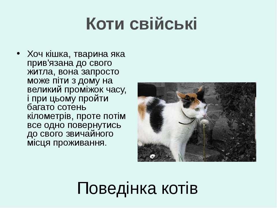 Хоч кішка, тварина яка прив'язана до свого житла, вона запросто може піти з д...