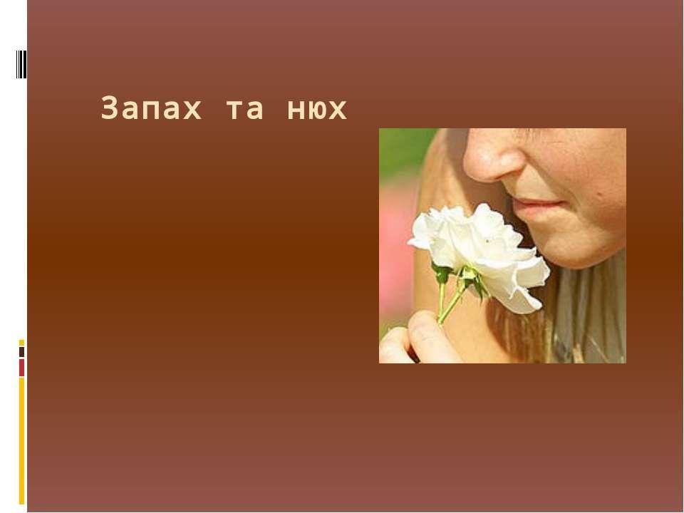 Запах та нюх
