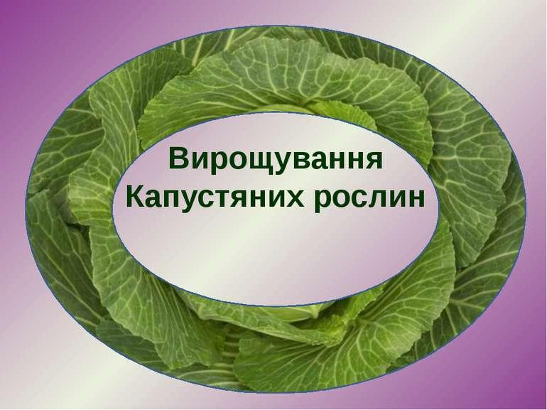 Вирощування Капустяних рослин