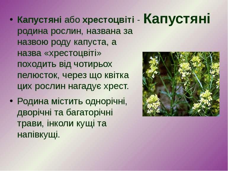 Капустяні Капустяніабохрестоцвіті- родина рослин, названа за назвою родук...