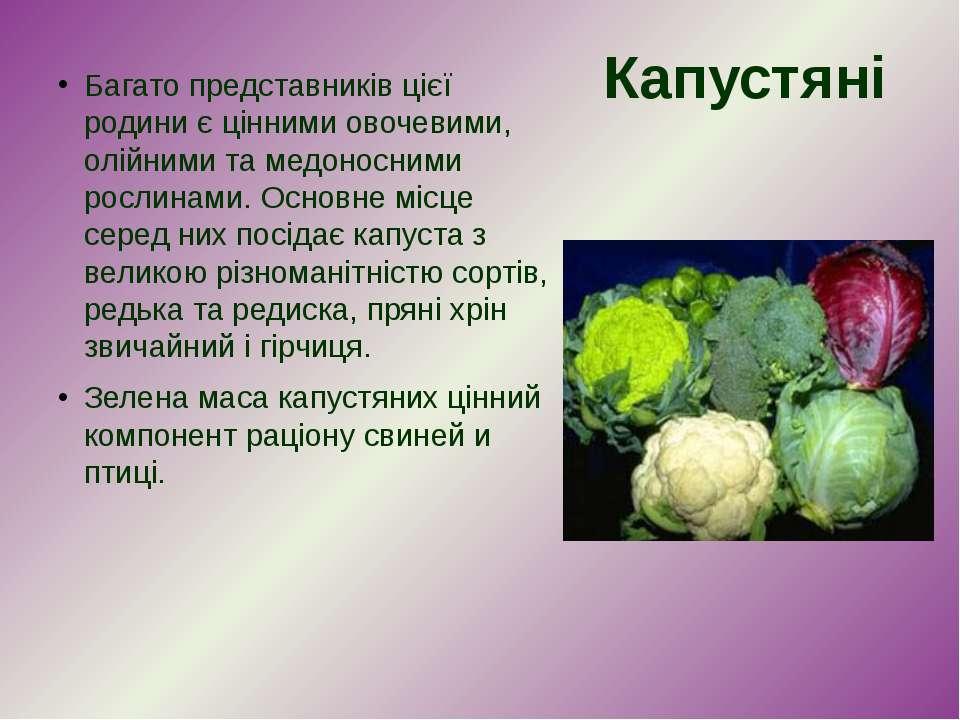 Багато представників цієї родини є цінними овочевими, олійними та медоносними...