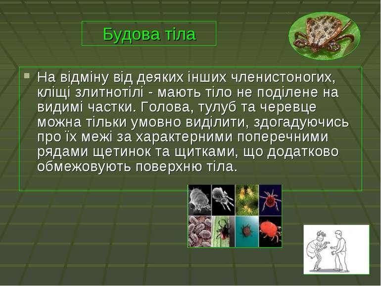 На відміну від деяких інших членистоногих, кліщі злитнотілі - мають тіло не п...