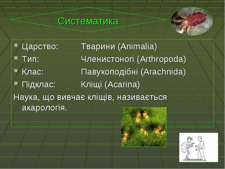 Царство: Тварини (Animalia) Тип: Членистоногі (Arthropoda) Клас: Павукоподібн...