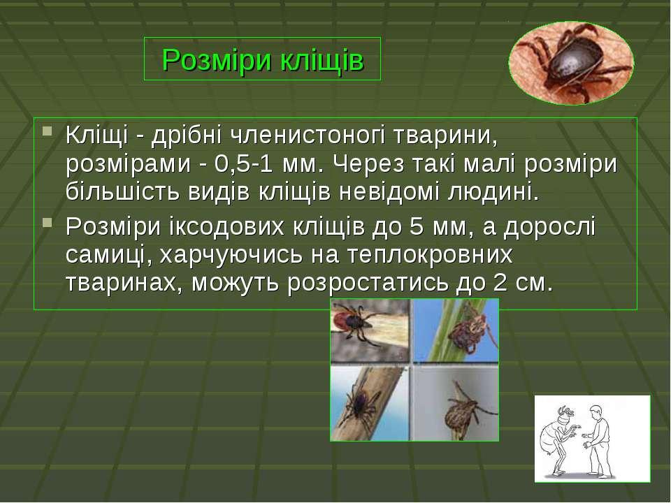 Розміри кліщів Кліщі - дрібні членистоногі тварини, розмірами - 0,5-1 мм. Чер...