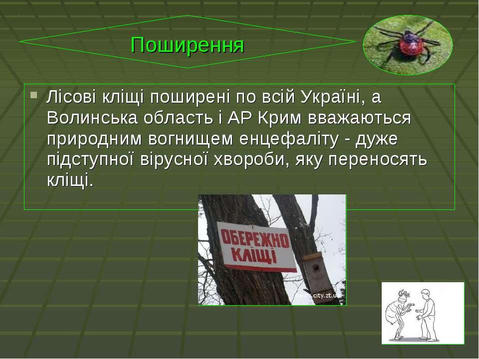 Лісові кліщі поширені по всій Україні, а Волинська область і АР Крим вважають...