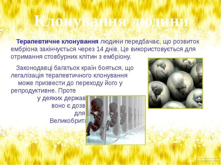 Терапевтичне клонування людини передбачає, що розвиток ембріона закінчується ...