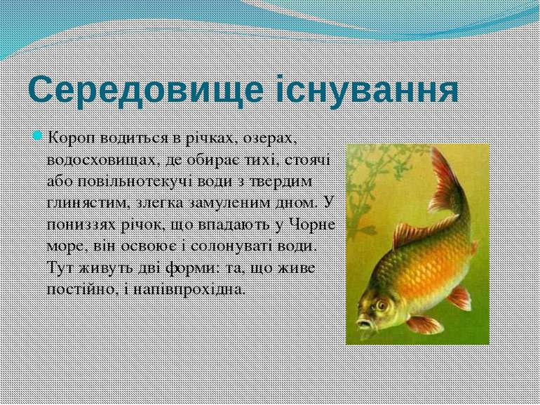 Середовище існування Короп водиться в річках, озерах, водосховищах, де обирає...