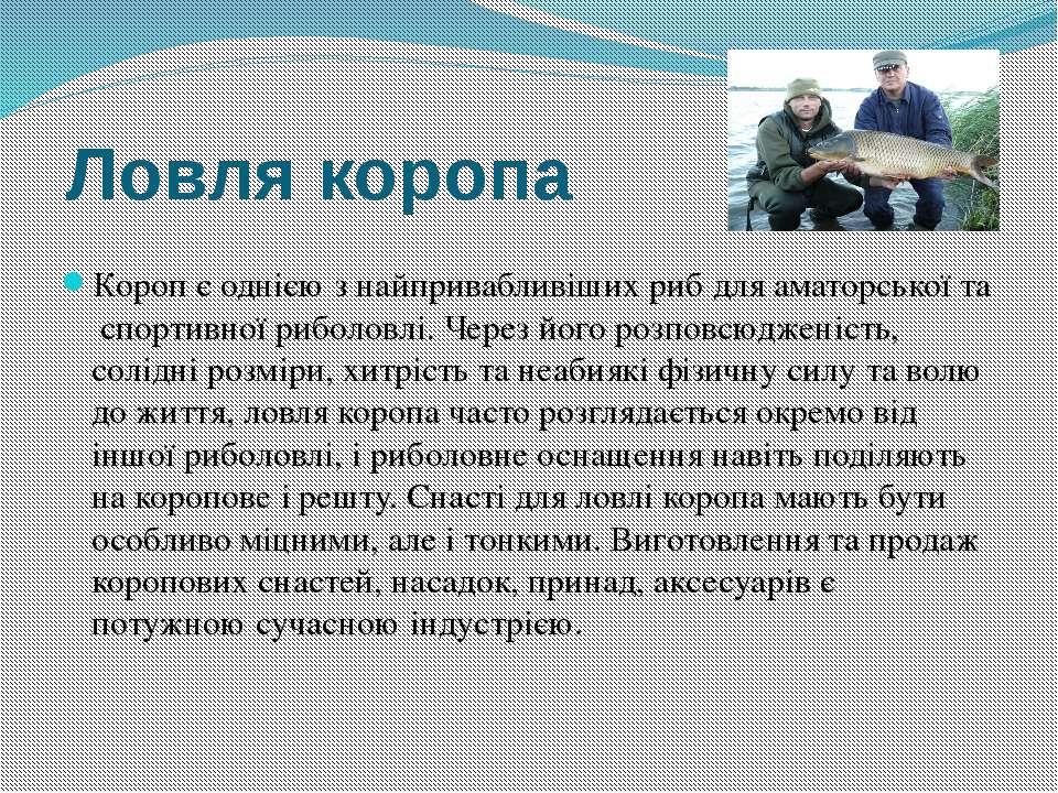 Ловля коропа Короп є однією з найпривабливіших риб для аматорської та спортив...