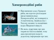 Химероподібні риби При вивченні класу Хрящові риби, ми коротко розглядали пре...