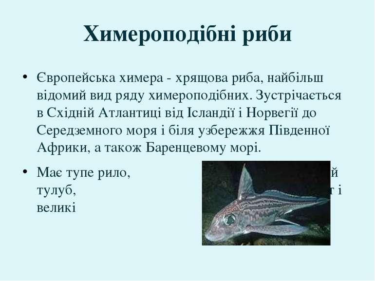 Європейська химера - хрящова риба, найбільш відомий вид ряду химероподібних. ...