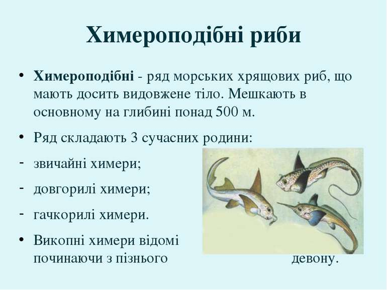 Химероподібні- ряд морськиххрящових риб, що мають досить видовжене тіло. Ме...
