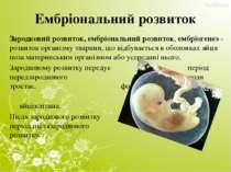 Ембріональний розвиток Зародковий розвиток, ембріональний розвиток, ембріоген...