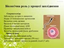 Біологічна роль у процесі запліднення Сперматозоїда Забезпечує зустріч із ово...