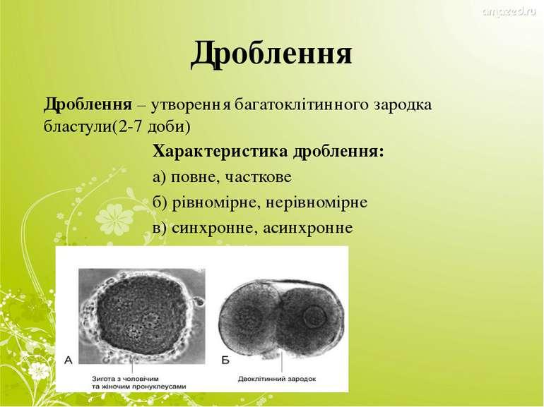 Дроблення Дроблення – утворення багатоклітинного зародка бластули(2-7 доби) Х...