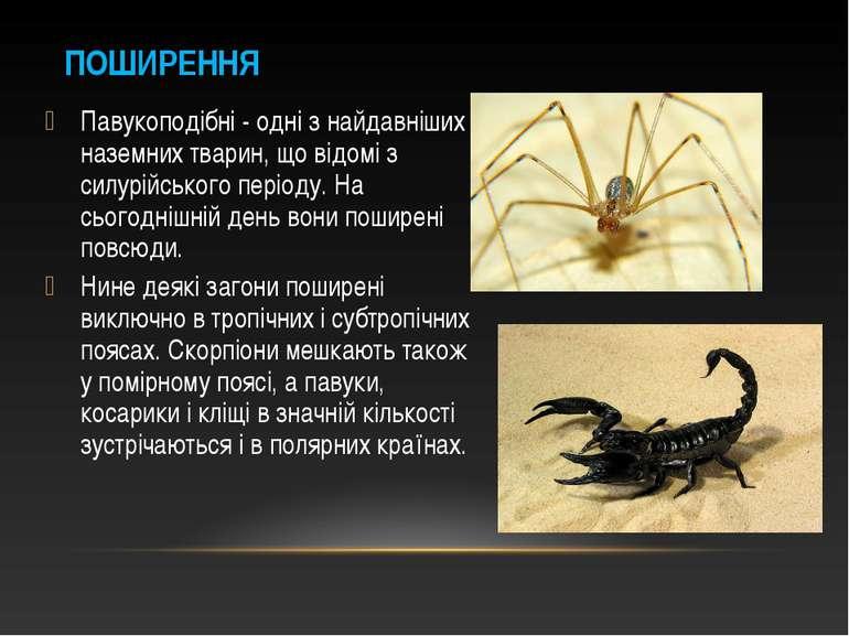 Павукоподібні - одні з найдавніших наземних тварин, що відомі з силурійського...