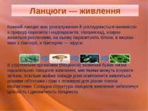 Кожний ланцюг має розгалуження й ускладнюється наявністю в природі паразитів ...
