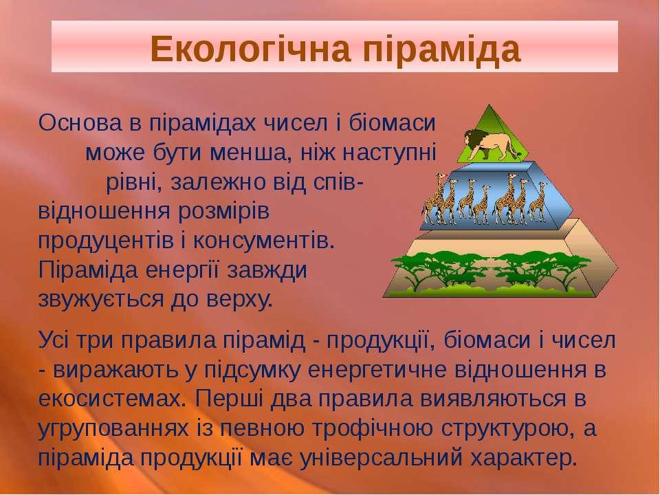 Основа в пірамідах чисел і біомаси може бути менша, ніж наступні рівні, залеж...