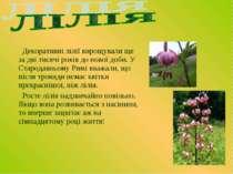 Декоративні лілії вирощували ще за дві тисячі років до нової доби. У Стародав...