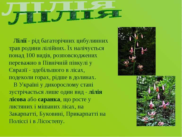 Лілії - рід багаторічних цибулинних трав родини лілійних. Їх налічується пона...