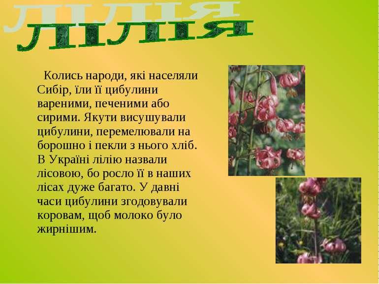 Колись народи, які населяли Сибір, їли її цибулини вареними, печеними або сир...