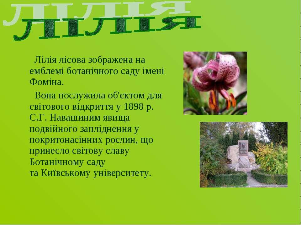 Лілія лісова зображена на емблемі ботанічного саду імені Фоміна. Вона послужи...