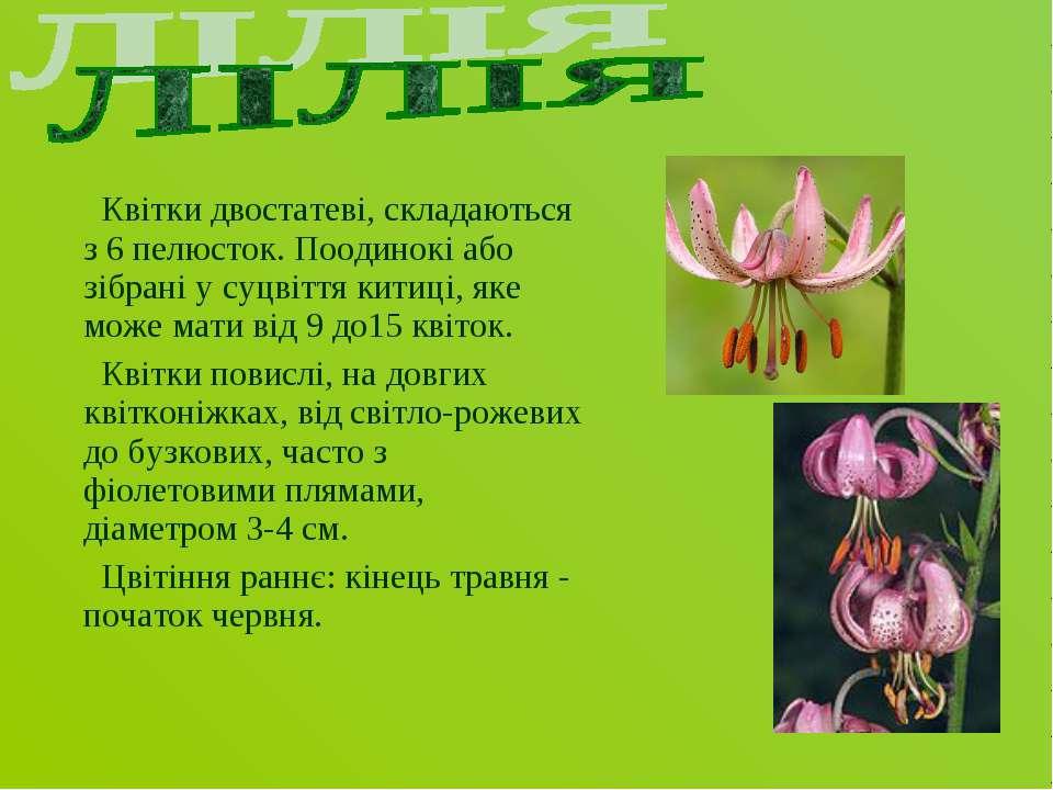Квітки двостатеві, складаються з 6 пелюсток. Поодинокі або зібрані у суцвіття...