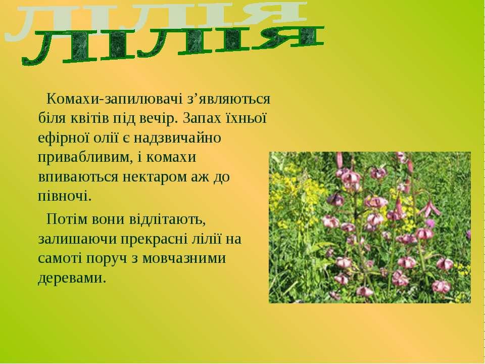 Комахи-запилювачі з'являються біля квітів під вечір. Запах їхньої ефірної олі...
