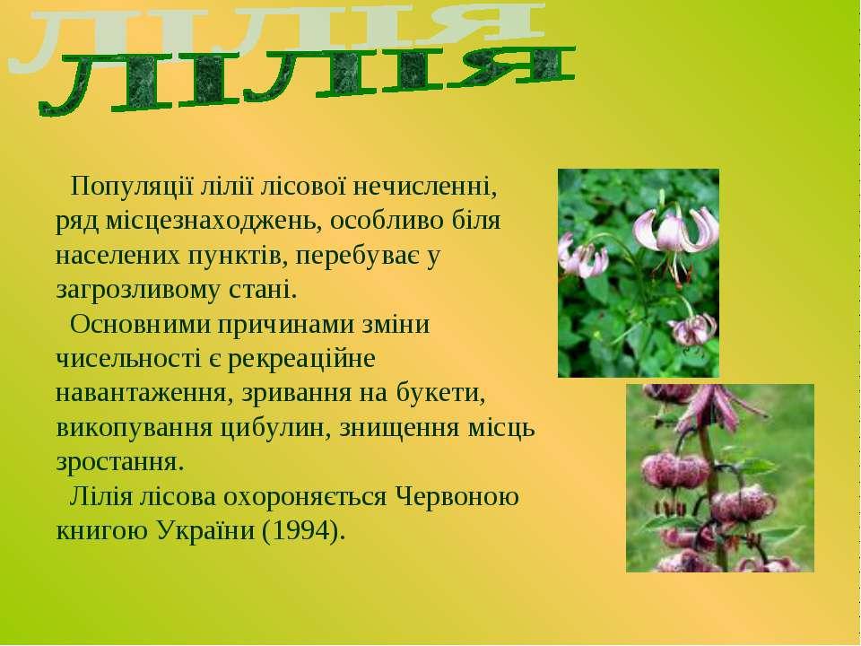 Популяції лілії лісової нечисленні, ряд місцезнаходжень, особливо біля населе...