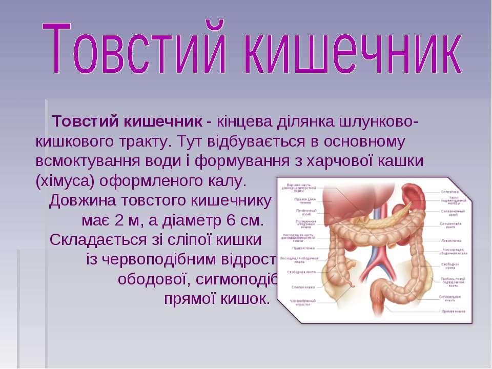 Товстий кишечник- кінцева ділянка шлунково-кишкового тракту. Тут відбуваєтьс...