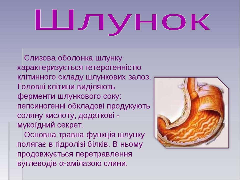 Слизова оболонка шлунку характеризується гетерогенністю клітинного складу шлу...
