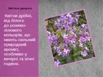 Квітки дрібні, від білого дорожево-лілового кольорів,що мають сильний приро...