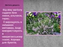 Від віку матіолу садили біля лавок, альтанок, терас. Її вирощують в змішаних ...