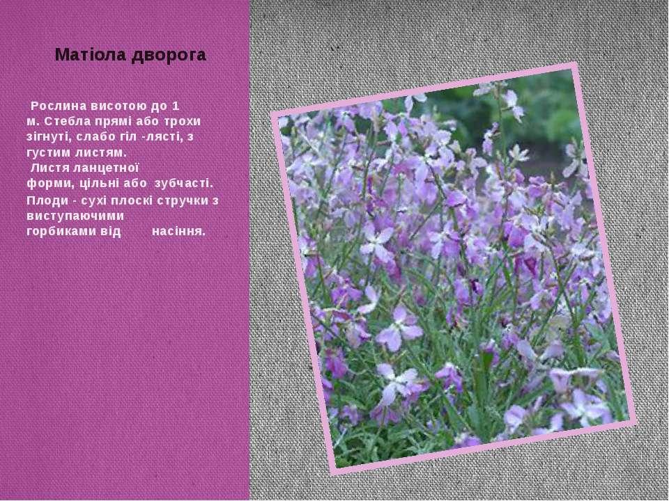 Рослина висотою до1 м.Стебла пряміаботрохи зігнуті,слабогіл -лясті, з ...