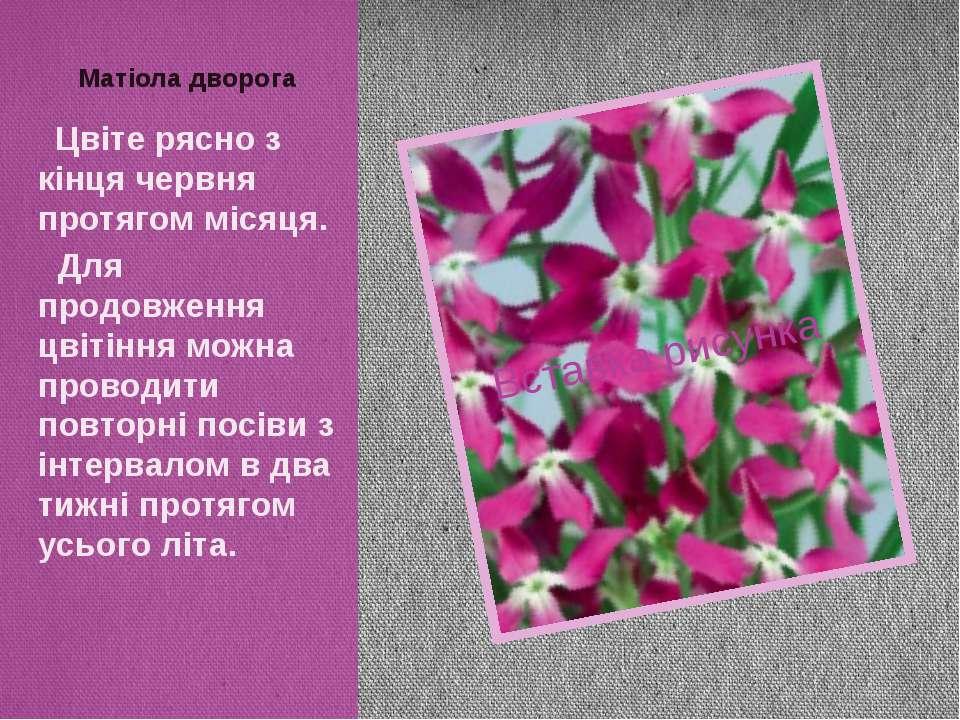 Цвіте рясно з кінця червня протягом місяця. Для продовження цвітіння можна пр...