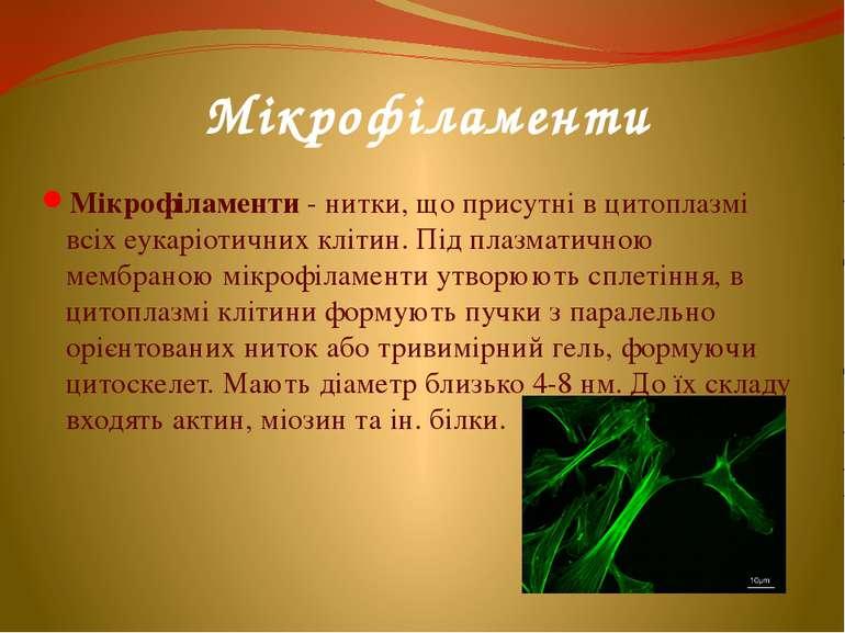 Мікрофіламенти Мікрофіламенти - нитки, що присутні в цитоплазмі всіх еукаріот...