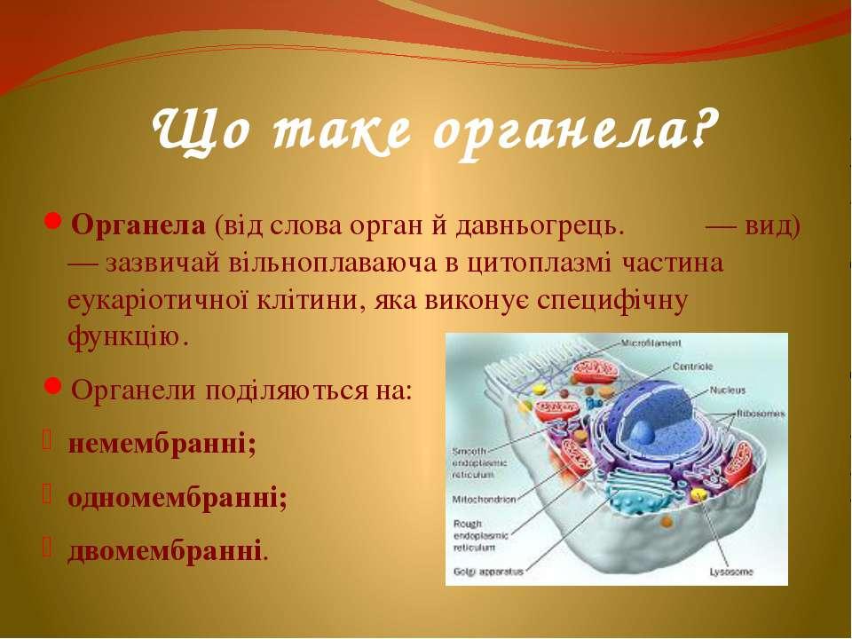 Що таке органела? Органела (від слова орган й давньогрець. εἶδος — вид) — заз...