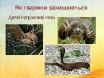 Деякі погрозливі пози Як тварини захищаються