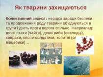 Колективний захист: нерідко заради безпеки та продовження роду тварини об'єдн...