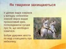 У деяких видів ховрахів у випадку небезпеки кожний звірок видає пронизливий к...