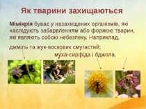 Мімікрія буває у незахищенихорганізмів, які наслідуютьзабарвленням або форм...
