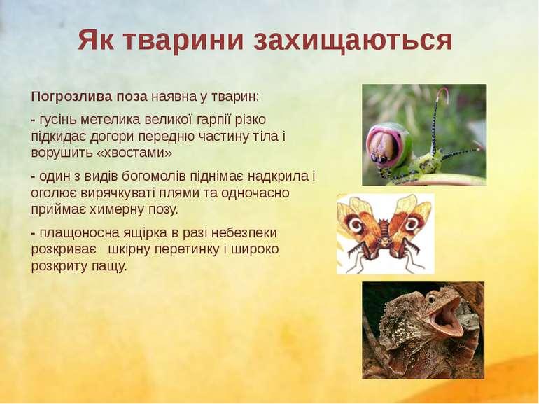 Погрозлива поза наявна у тварин: - гусіньметеликавеликої гарпії різко підки...