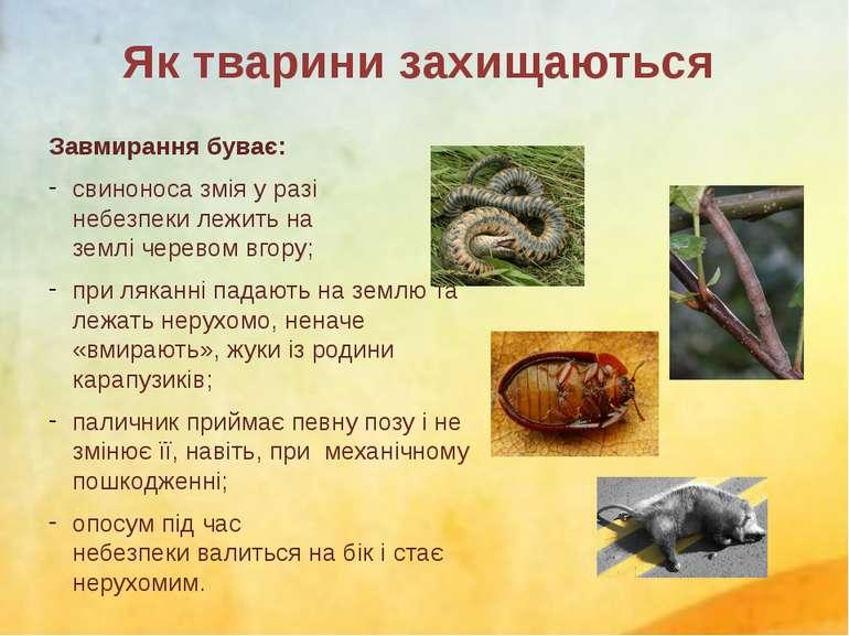 Завмирання буває: свиноносазмія у разі небезпекилежитьна землічеревом вго...