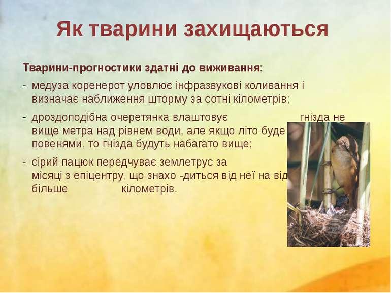 Тварини-прогностики здатні до виживання: медузакоренерот уловлюєінфразвуков...