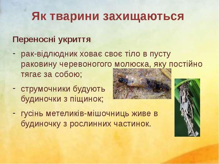 Переносні укриття рак-відлюдник ховає своє тіло в пусту раковину черевоногого...