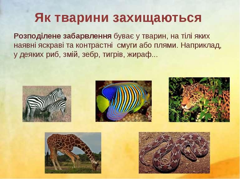 Розподілене забарвлення буває у тварин, на тілі яких наявні яскраві та контра...