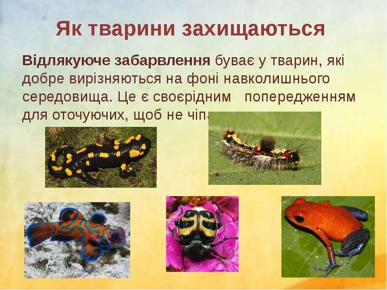 Відлякуюче забарвлення буває у тварин, які добре вирізняються на фоні навколи...