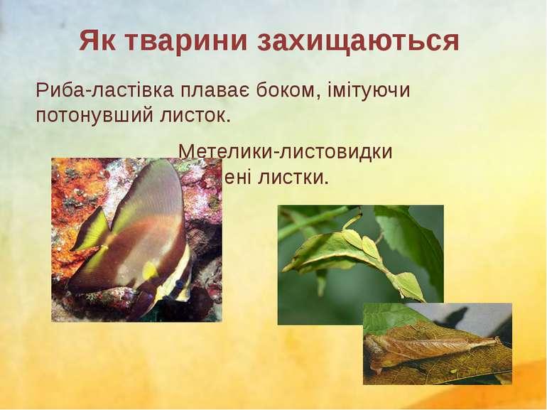 Риба-ластівка плаває боком, імітуючи потонувший листок. Метелики-листовидки н...