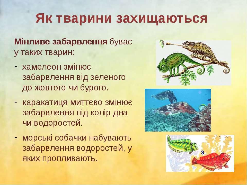 Мінливе забарвлення буває у таких тварин: хамелеон змінює забарвлення від зел...