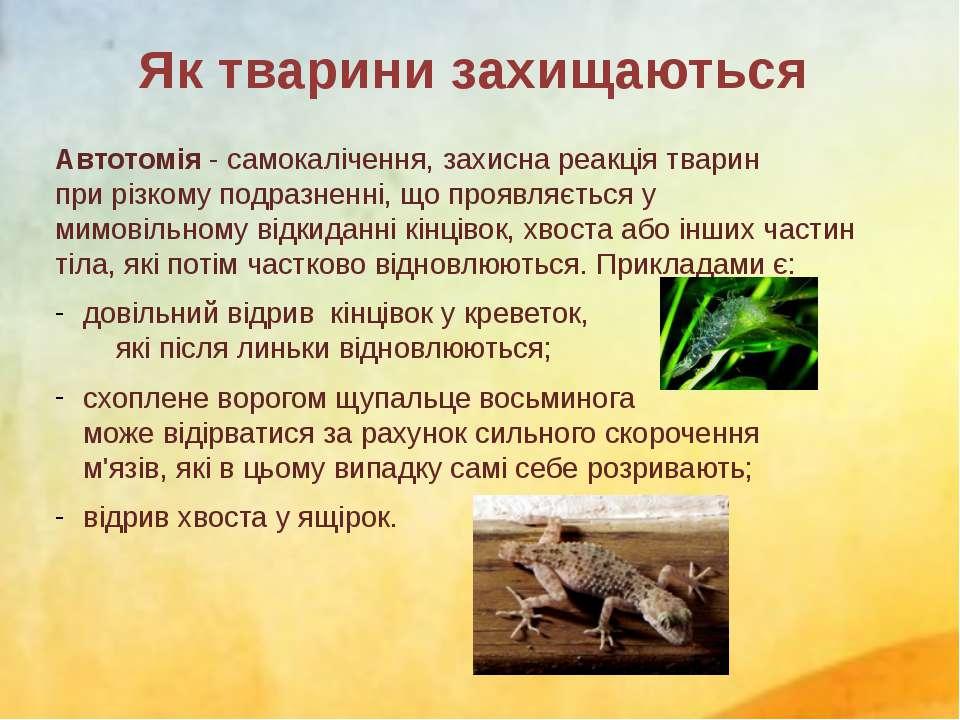 Автотомія- самокалічення,захисна реакція тварин прирізкомуподразненні, що...