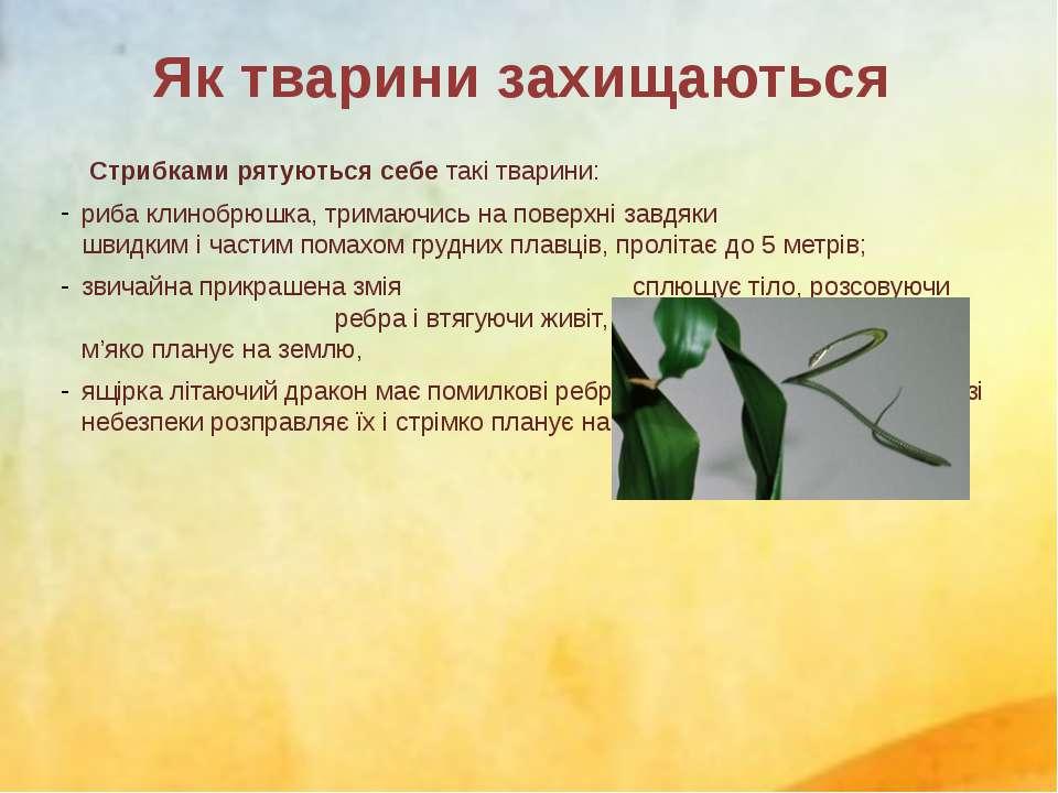 Стрибками рятуються себе такі тварини: рибаклинобрюшка, тримаючись на поверх...